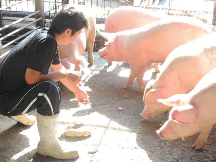 ブッタまげー「豚肉の美味しさ」お気付きですか?
